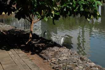 Lakeside birds