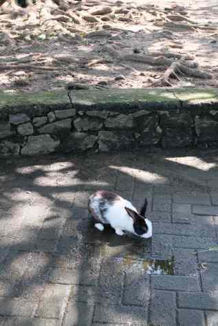 Random bunny in park